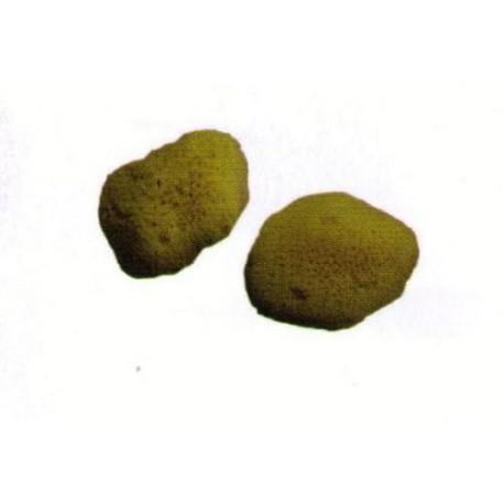 Esponja Natural Cajita De 12