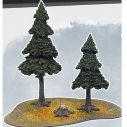 MFF - Evergreen Pine Forest